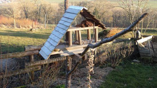 Donner un coup de pouce aux oiseaux en hiver : comment faire juste