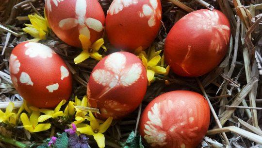 Teindre ses œufs de Pâques au naturel