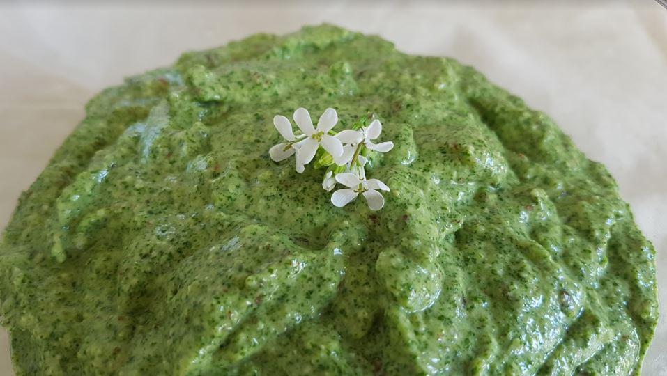 Plantes sauvages comestibles : l'alliaire, le condiment à tout faire