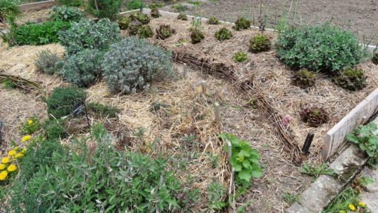 Jardin en permaculture : créer une butte surélevée