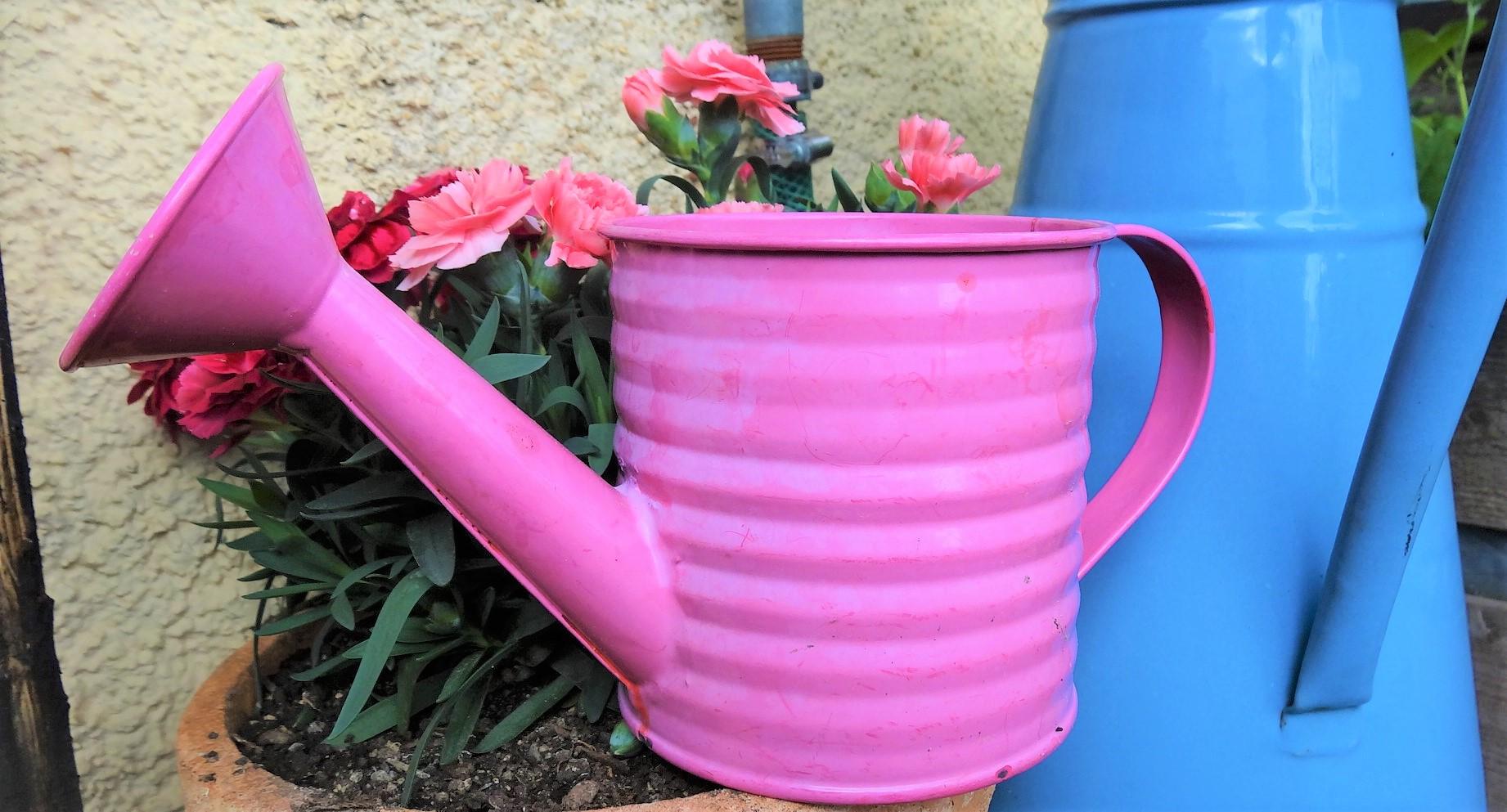 Jardin en permaculture : quand faut-il arroser ?