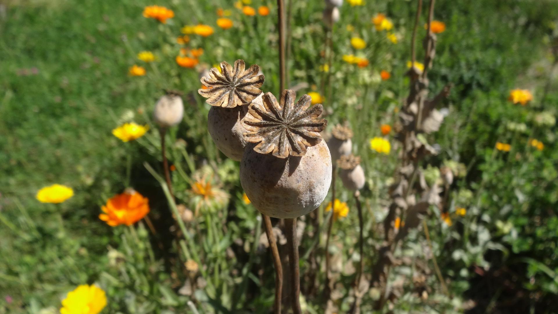 Jardin en permaculture : Produire ses semences